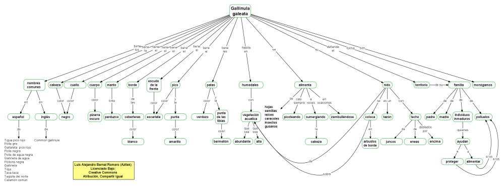 Mapa conceptual de la Gallinula Galeata