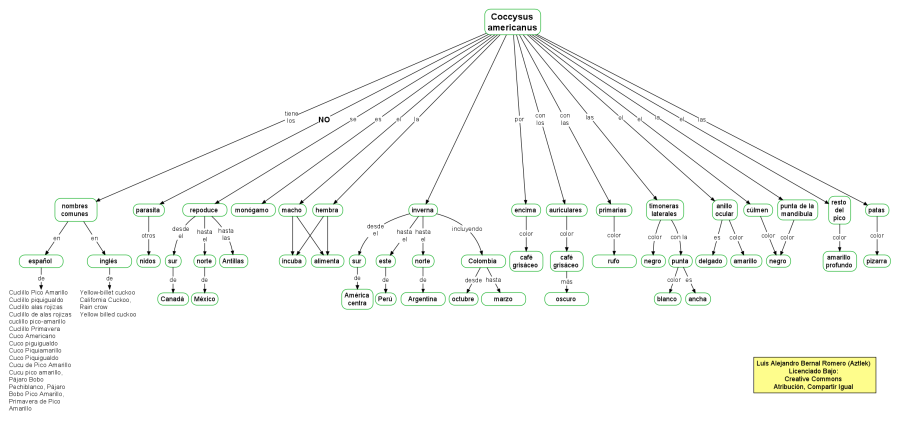 Mapa conceptual del Coccysus Americanus